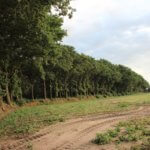landerijen en bos - arrangementen